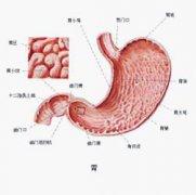 胃溃疡离胃癌有多远?